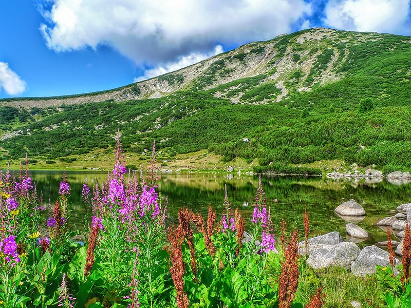 Get to Know Bulgaria ~ Pirin National Park, UNESCO-site, 800x600-optimized